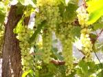 finally grapes